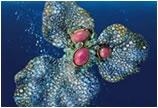 海螺珠 动辄天价的稀世珠王