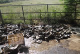 湖北黄梅县坚决取缔非法珍珠养殖