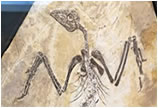 9月黄石展精品提前看——化石藏品特展