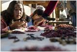缅甸红宝石产业受关注 矿工生活艰难危险