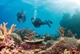 千年生长一朝采 日本限制红珊瑚出口或将放大招