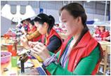 广西北海铁山港区今年珍珠养殖开始插核